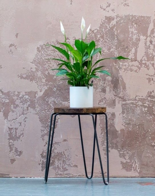 Peace lily plant on a stool