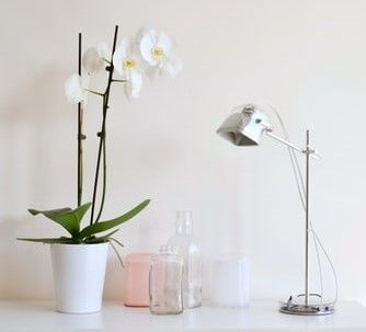 White orchids on a desk with a lamp